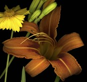 Day Lily and Coreopsis