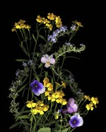 Pansy, Rosemary & French Tarragon