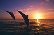 Dolphin Sunset Dive Duo