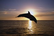 Dolphin Sunset Dive I