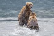 Bears Bathing