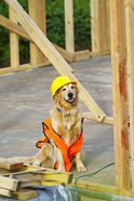 Canine Construction I