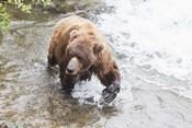 Wet Bear Solo