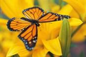 Orange Butterfly Landing