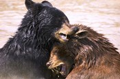 Wet Bear Hug