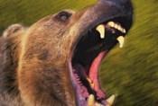 Roar Of The Beast