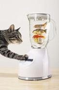 Cat's Fish Shake