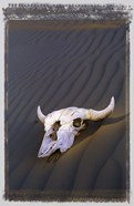 Deserted Skull Brown Sand