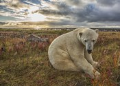 White Bear Under The Clouds