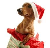 Santa's Puppy Gift
