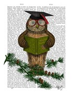 Owl Reading On Branch