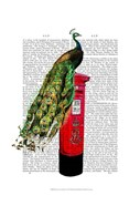 Peacock on Postbox