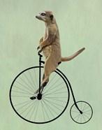 Meerkat on Black Penny Farthing