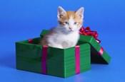 Cat Surprise