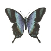 Butterfly Botanical I