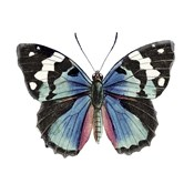 Butterfly Botanical II