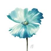Poppies Tempo II