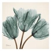 Tulip Sky