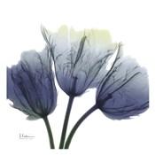 Midnight Tulips Trio