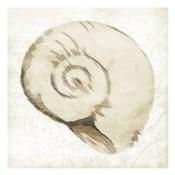 Sepia Shell