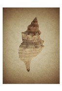 Shell on Sepia 2