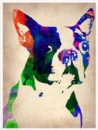 Boston Terrier Watercolor