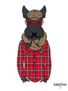 Scottish Terrier In Pin Plaid Shirt
