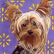 Dlynn's Dogs - Ringo