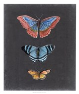 Butterflies on Slate III