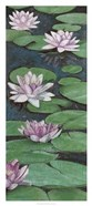 Tranquil Lilies II