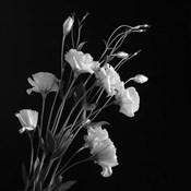 White Flowers Gray