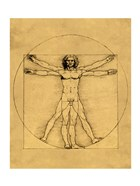 Proportions of the Human Figure - Vitruvian Man