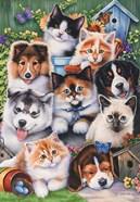 Kittens & Puppies In The Garden