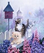 Cats In Front Of The Birdfeeder