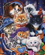 Kittens In Closet