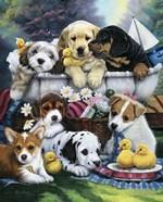 Bath Time Pups