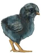 Chick Black wood