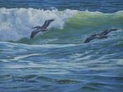 Pelican Skimmers