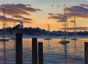 Sea Gull And Sails