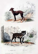 Pair of Dogs II