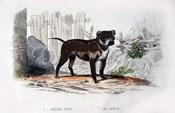 Dog IV