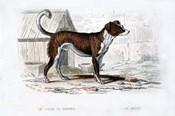 Dog VIII