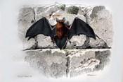 Bat I