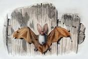 Bat II