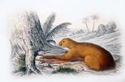 Mammal I
