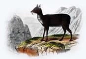 Mammal III