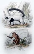 Pair of Mammals