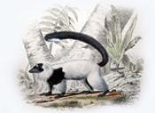 Mammal IV