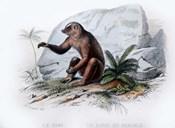 Mammal V