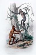 Pair of Monkeys II
